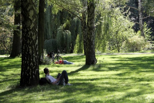 Men relaxing in shade of trees in sunny Tiergarten park, Berlin. Happier Place