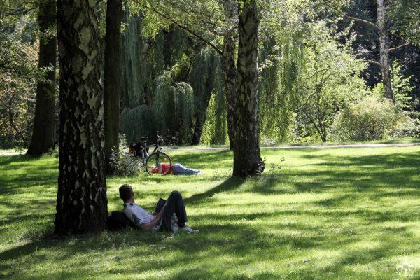 Men relaxing in shade of trees in sunny Tiergarten park, Berlin. Happier Place