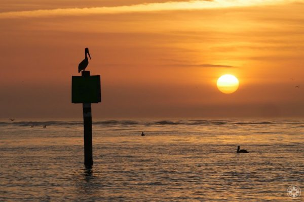 lone pelican on sign in water at sunset, Honeymoon Island, Florida