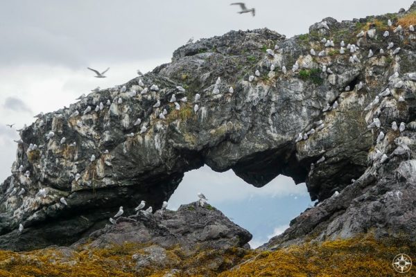 birds, Gull Island Arch, Rock Window, Hole in the Rock, kittiwakes