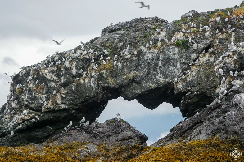 birds, Gull Island Arch, Rock Window, Hole in the Rock, kittiwakes