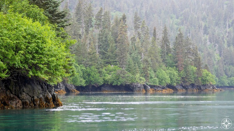 Rising out of the mist, cove, colorful rocks, green, tall trees, Kachemak Bay, Alaska