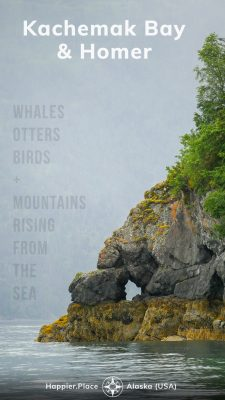 Kachemack Bay and Homer Alaska, whales, otters, birds, mountains rising from the sea