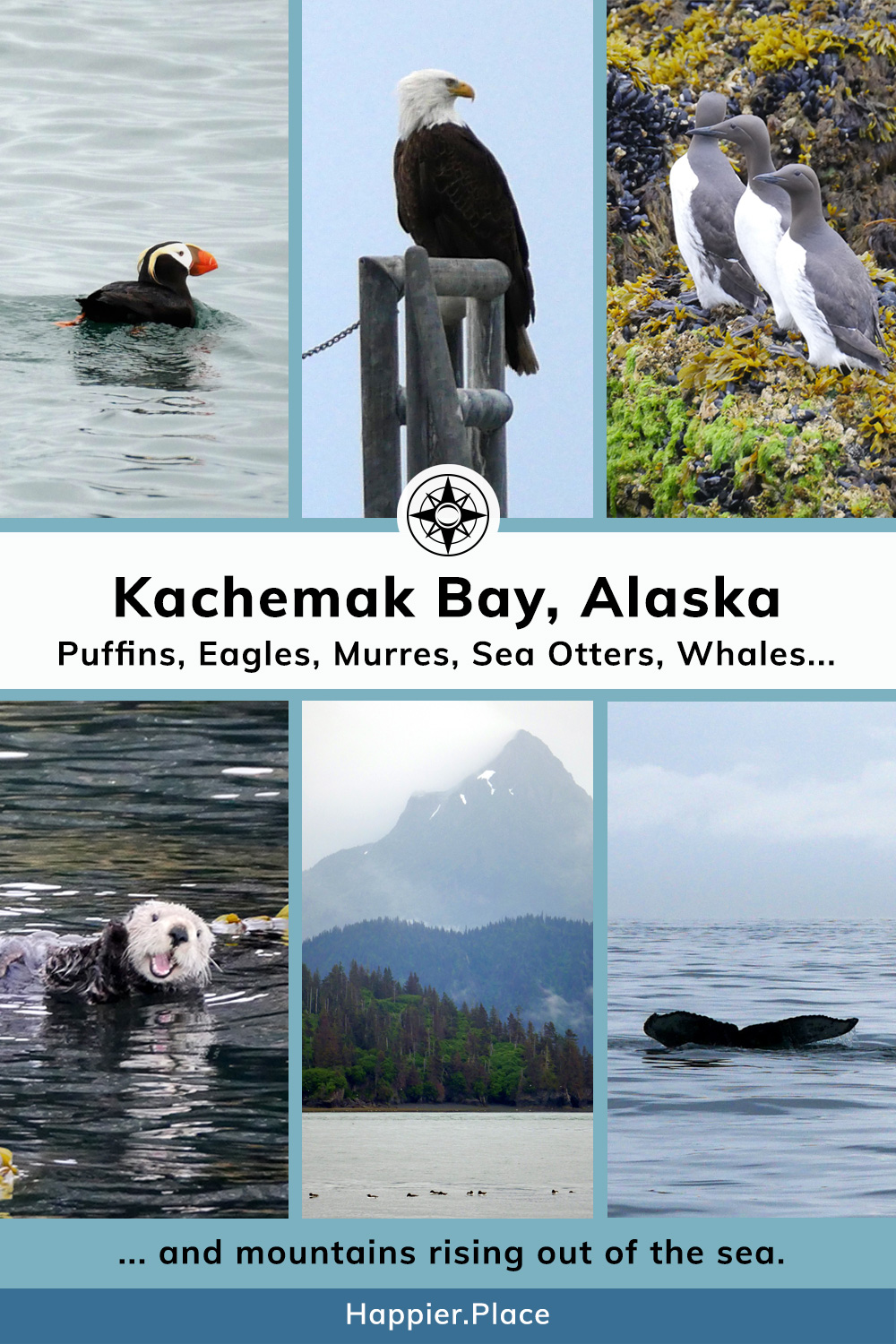 Kachemak Bay and Homer Alaska where you can see puffins, eagles, murres, sea otters, and whales - and mountains rising from the sea. #HappierPlace #Alaska
