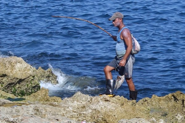 Not just fishing, but also catching - Cuban fisherman and his haul and simple wooden stick used as a fishing pole