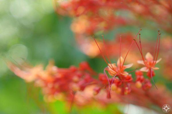 Macro detail of a Pagoda Flower