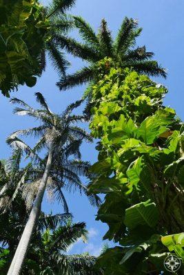 Plants growing up palm trees in Sunken Gardens, Florida