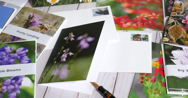 Flower photography greeting cards with envelopes, fountain pen, great outdoors stamp, Happier Place, photos by Luci Westphal