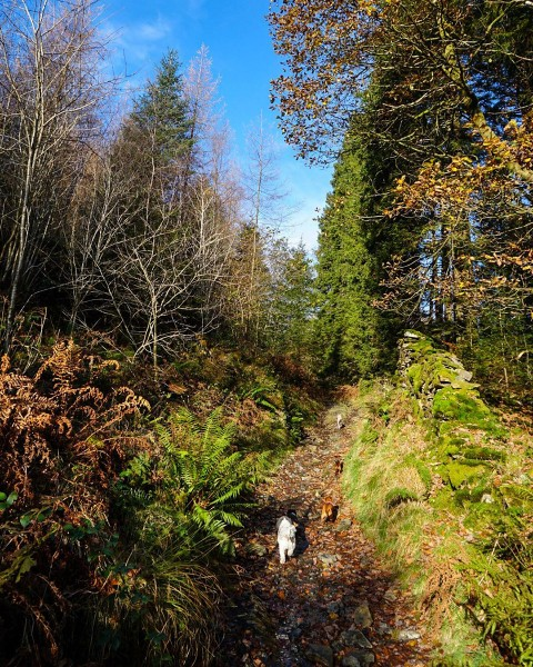 Hiking dogs on a trail in the colorful lush countryside of the Lake District one the mountain ranges of Britain