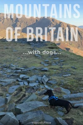 Hiking Dachshund, Mountains of Britain with dogs: Scafell Pike summit, The Lake District in England, Great Britain, HappierPlace