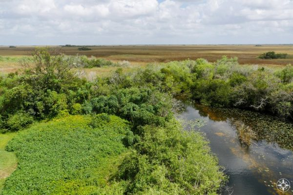 View south-east from Shark Valley Observation Tower, Everglades, Florida