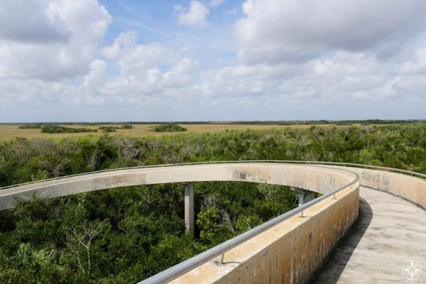 River of Grass and Tree Islands seen from Shark Valley Observation Tower, Everglades National Park, Florida