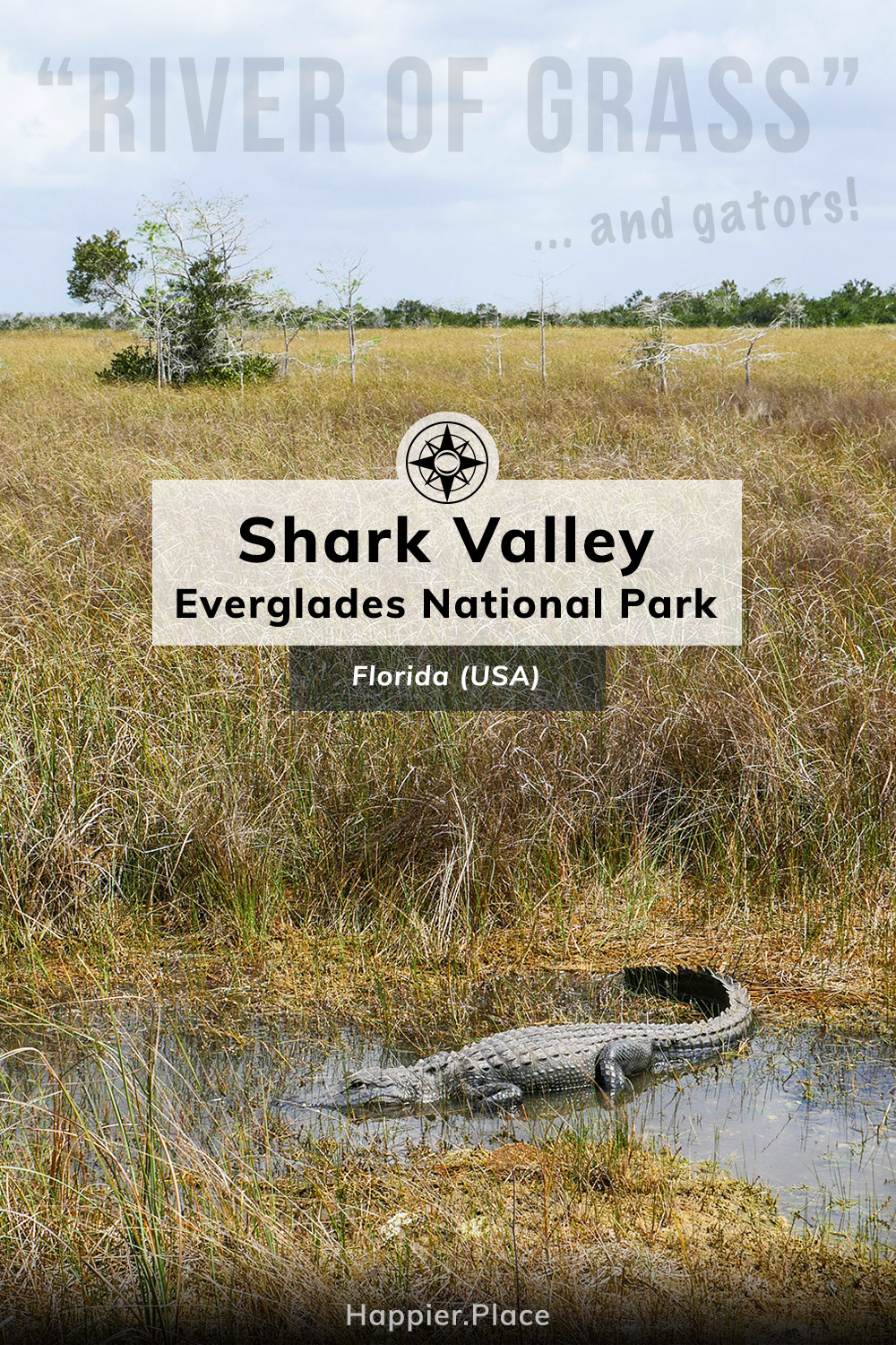Shark Valley: Close Encounters with Wildlife in Everglades National Park (Florida)