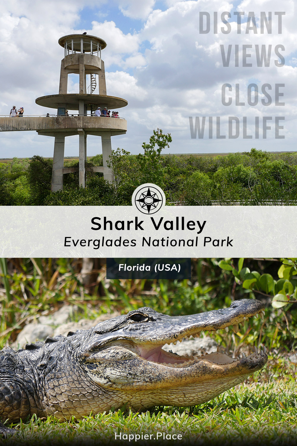 Distant views and close wildlife in Shark Valley Everglades National Park, Florida, USA, gator, observation tower, Happier Place