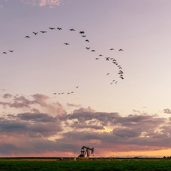 Bird formation during sunset over oil field, nature phone photography