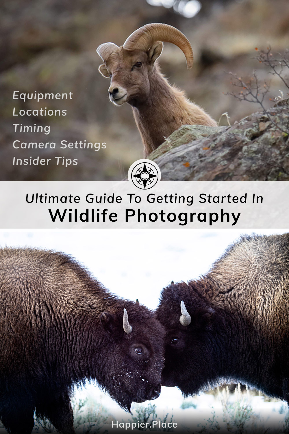 Ultimate Guide to getting started in wildlife photography, equipment, locations, timing, camera settings, insider tips, Happier Place, bison, bighorn sheep