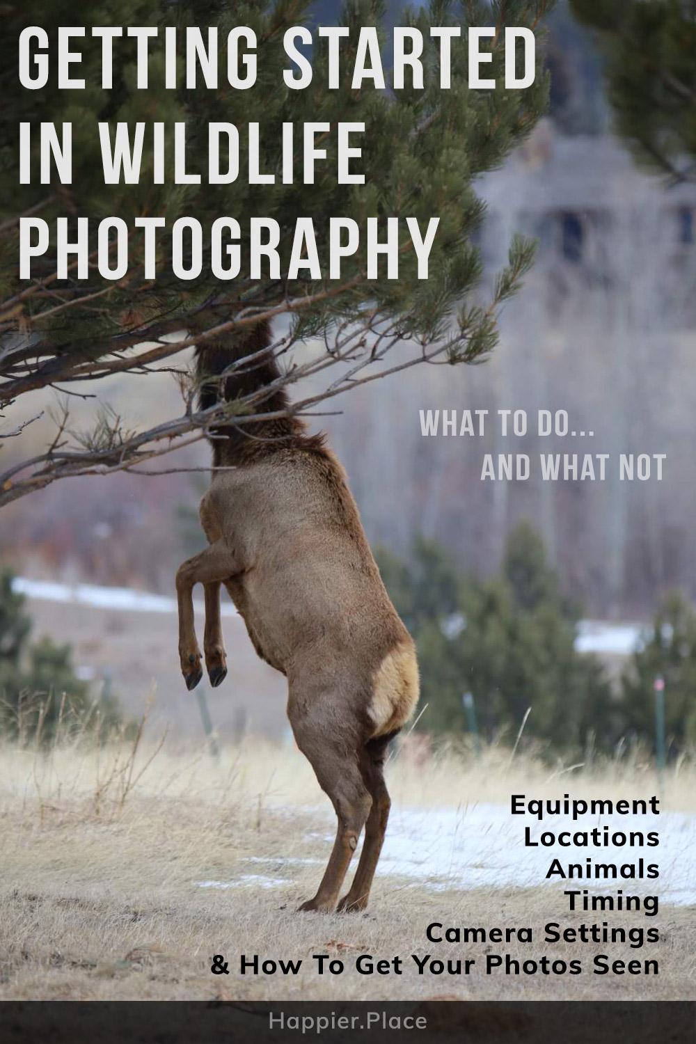 Ultimate Guide to getting started in wildlife photography: , equipment, locations, animals, timing, camera settings, insider tips and how to get your photography seen by Mike East for Happier Place.