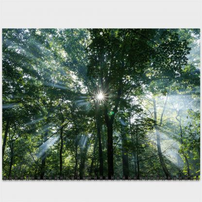 2021 Happier Place Nature Photography Calendar, March photo, sunlight rays bursting through trees, Chattahoochee National Forest, Georgia