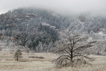 Tree, meadow, and hill covered in frost and fog in Colorado, pic155, frosted and fogged, postcard