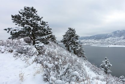 snow-covered trees above icy lake, Horsetooth Reservoir, Colorado, postcard, pic156: south snow trees