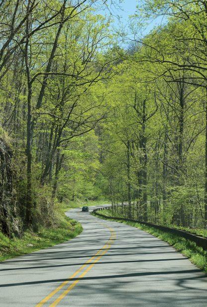 Car on curvy hill road through spring forest, Blue Ridge Mountains, North Carolina, pic158: Blue Ridge road, pic158 vert green Blue Ridge Road, postcard