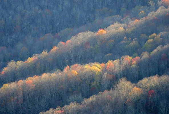 Colorful sunlit trees along ridges of the Blue Ridge Mountains, pic160: sunlit tree ridges, postcard