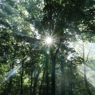 Sunlight rays through tall forest trees in Appalachian Mountains, Georgia, pic185, forest sunlight GA