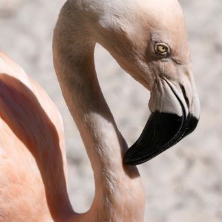 flamingo head, light pink, black beak, curved neck, happier place, greeting card, pic188