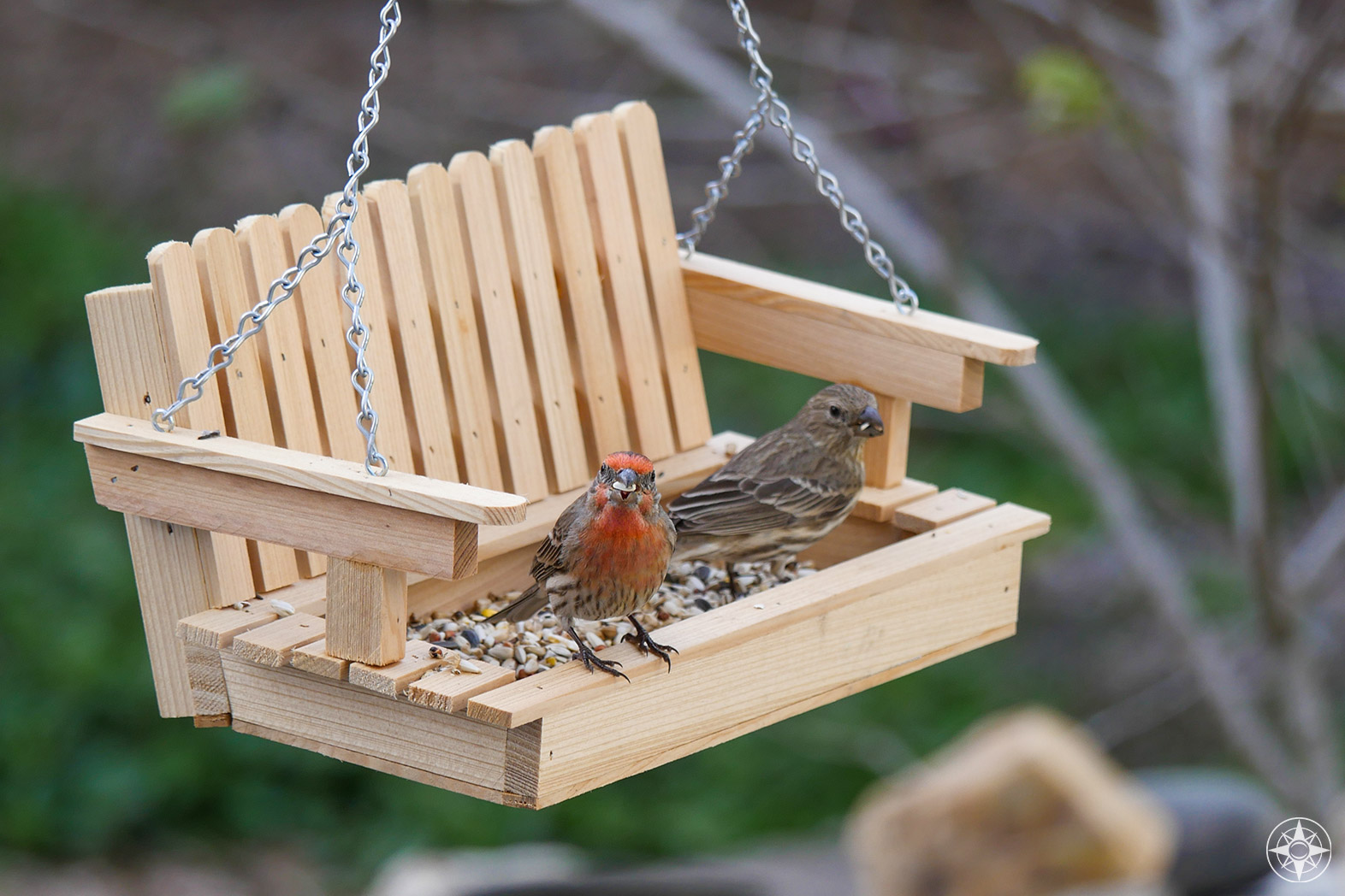 House finches on wooden swing bird feeder, brown bird with red chest and orange chest, great backyard bird count