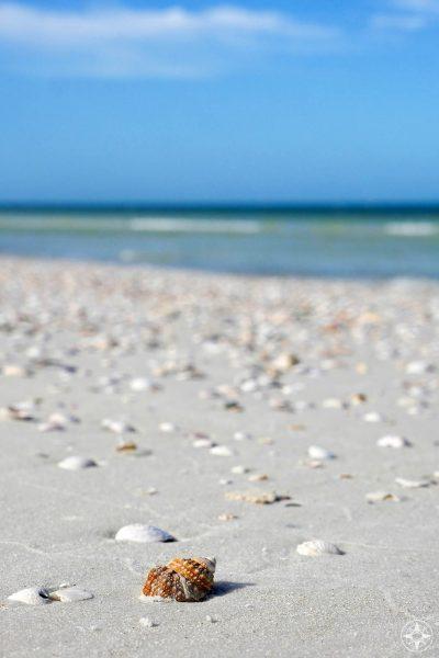 variety of seashells, beach, open sea, Gulf of Mexico, Tampa Bay