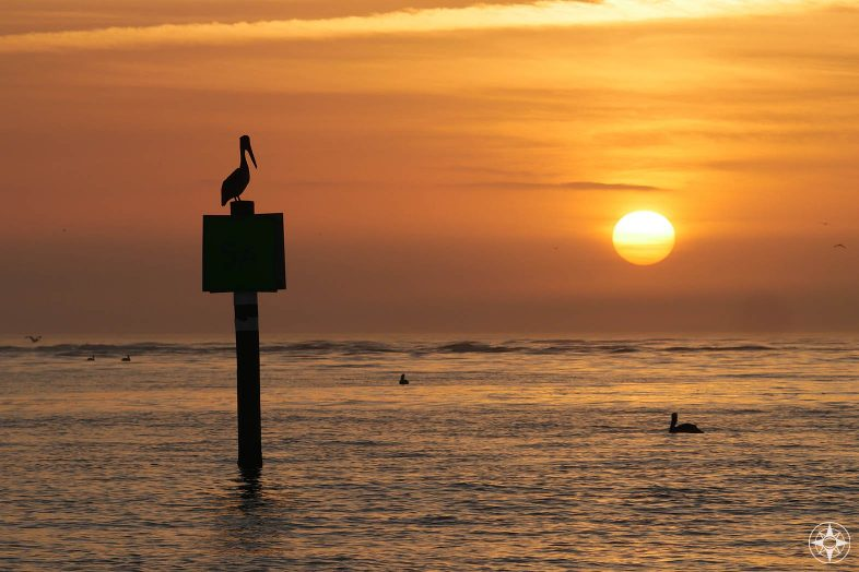 Pelican watching sunset, silhouette, channel sign, Honeymoon Island Dog Beach, Gulf of Mexico
