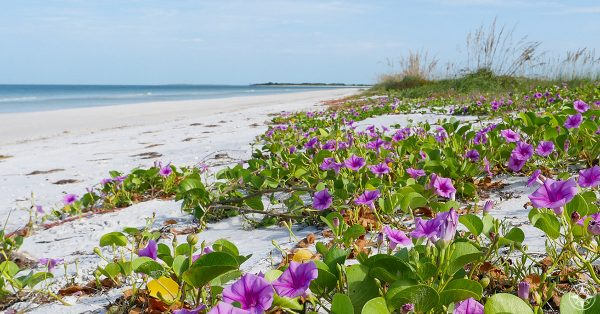 Honeymoon Island, State Park, Florida