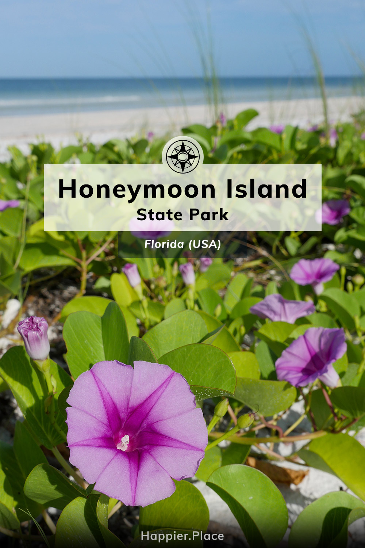 Natural Beach Paradise, Honeymoon Island State Park, Florida, Happier Place