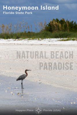 reddish egret, Natural Beach Paradise, Honeymoon Island State Park, Florida, Happier Place,
