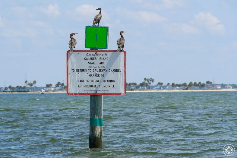 Cormorants on a Caladesi Island State Park channel sign with the Dunedin Causeway in the background.
