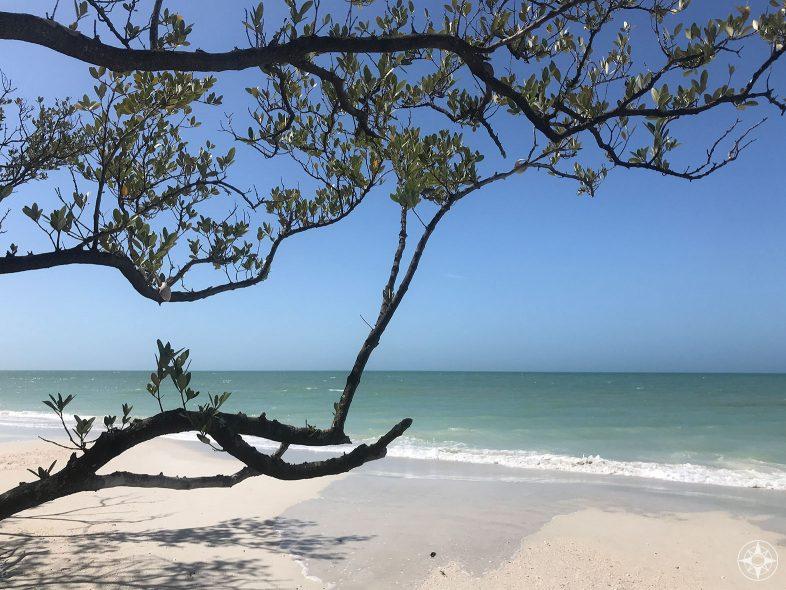 Tree and shadow along Caladesi Beach, Florida