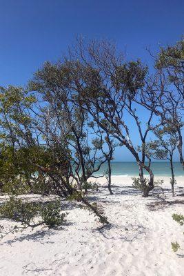 white sand Gulf Coast beach with trees and blue sky