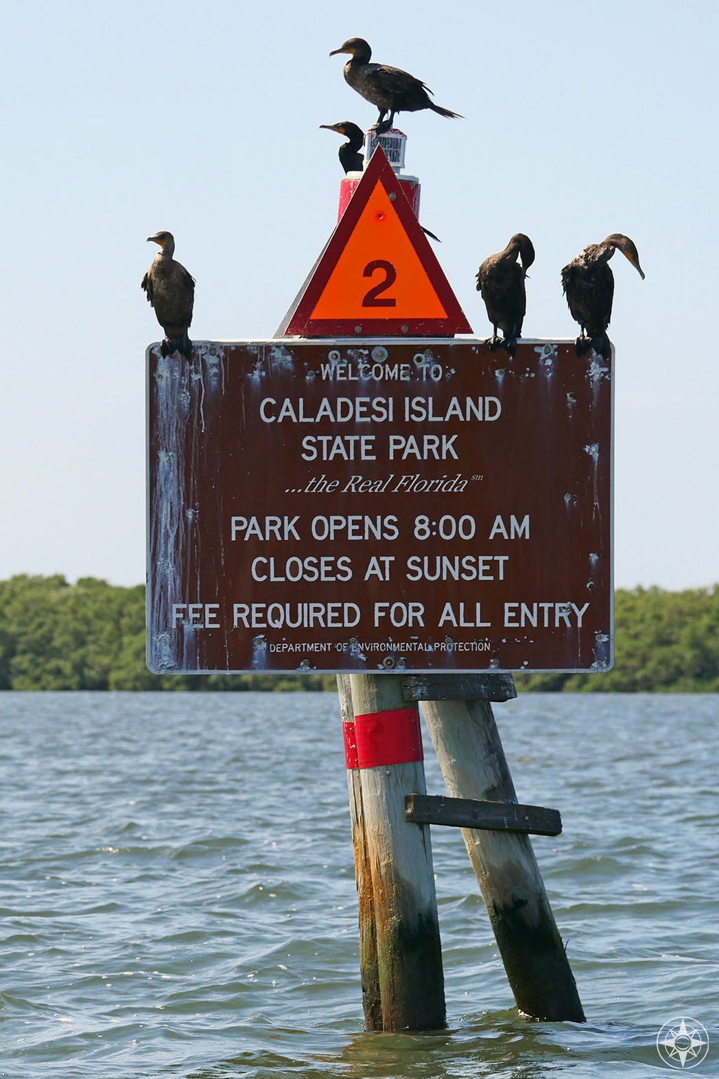 Cormorants on sign at the waterway entrance to Caladesi Island State Park, the real Florida