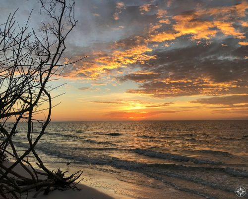 Sunset over the Gulf of Mexico through barren tree branches