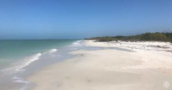 Caladesi Island features big white sand beach, clear water, blue sky, trees
