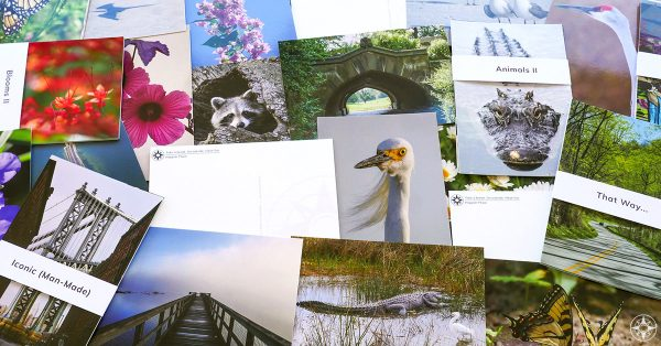 new outdoor and nature photography postcards by Happier Place and Luci Westphal, featuring images of egret, alligator, flowers, Manhattan Bridge, Prospect Park Bridge, butterfly