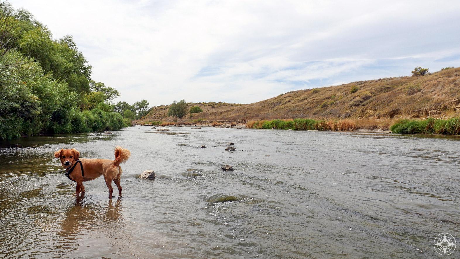 Whiskey Dog in St. Vrain River