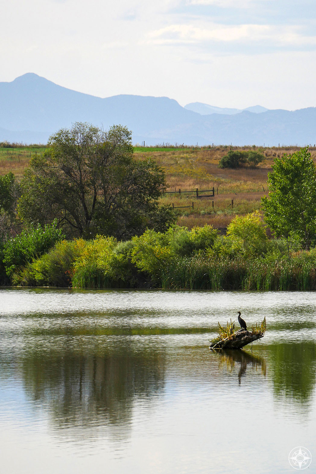 cormorant on pond with Rocky Mountains backdrop in St Vrain State Park, Colorado