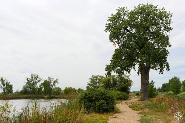 tall tree and trail around pond in St Vrain State Park, Colorado