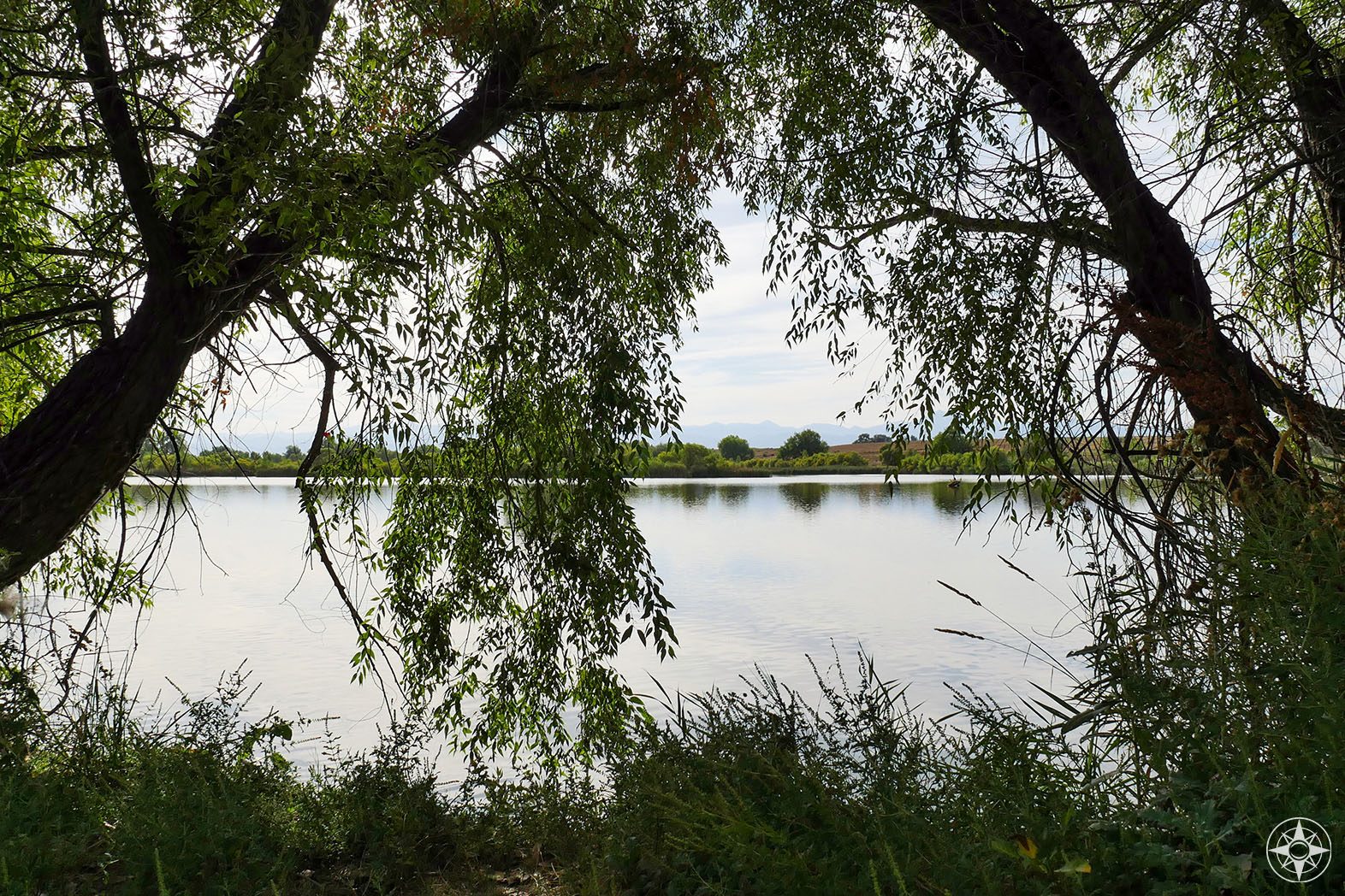 View through the trees of Pelican Pond in St Vrain State Park