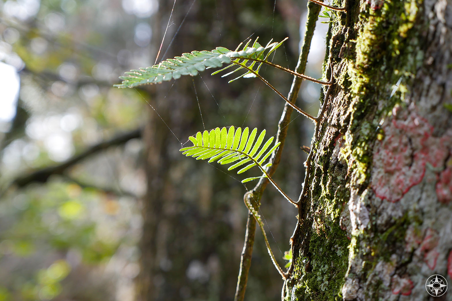 small fern leaves growing on tree, lit by the sun
