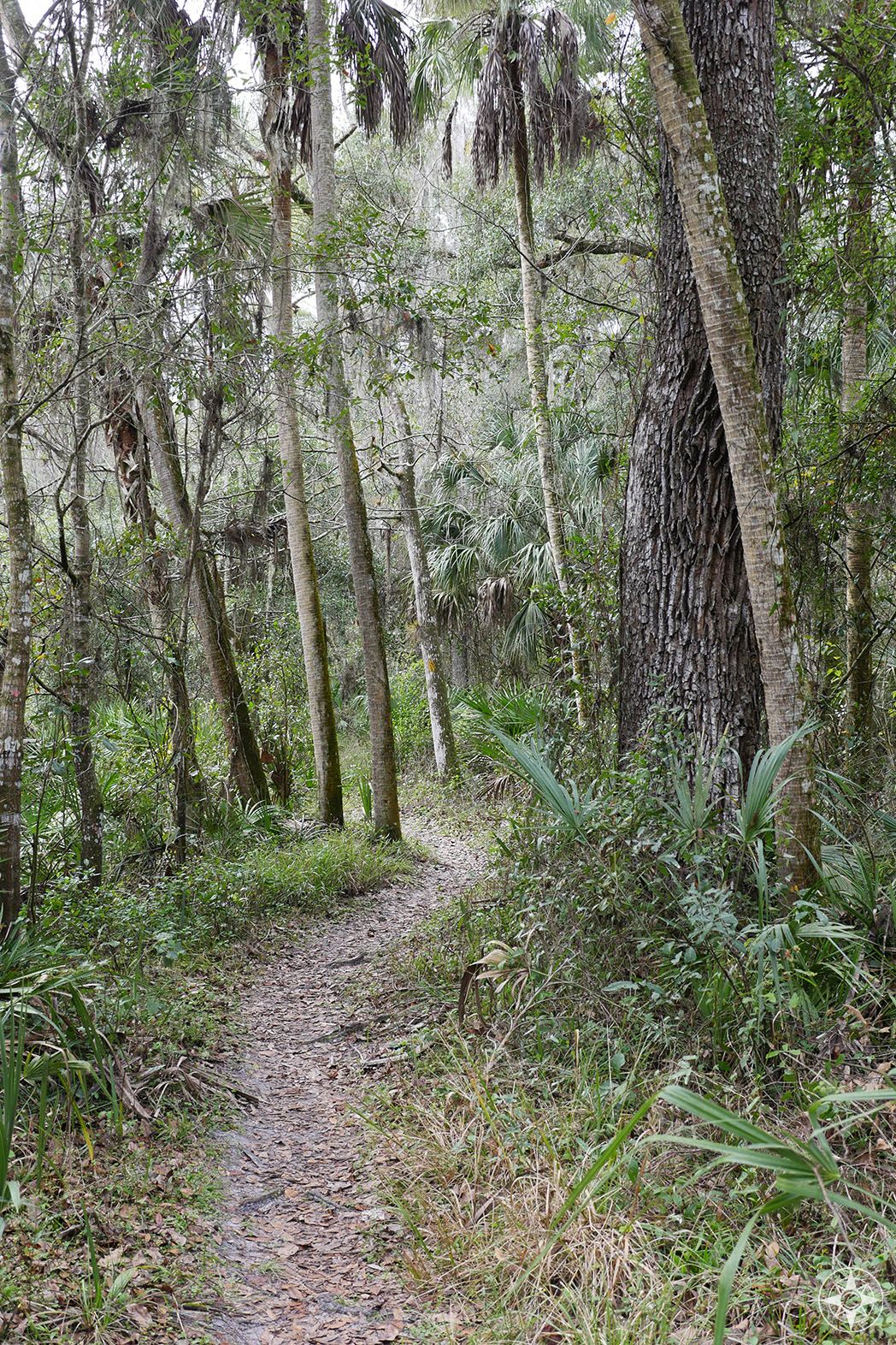 Trail into the woods, Hillsborough River State Park, Florida, Tampa Bay