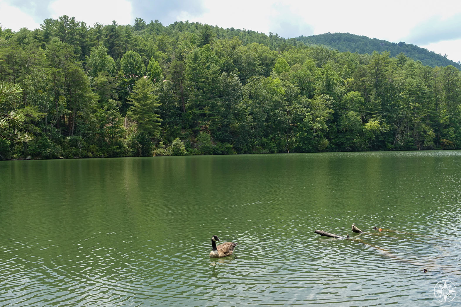 Wild geese on Tallulah Lake above Tallulah Dam and the Falls